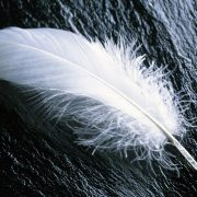 A feather! - Mark Bajerski - Pure Energy Healing Academy