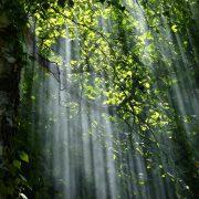 Prudencia - Mark Bajerski | Pure Energy Healing Academy