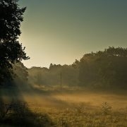 Shine Your Light - Mark Bajerski - Pure Energy Healing Academy