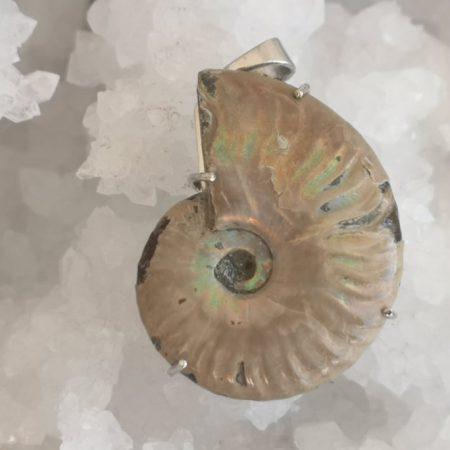 Ammonite Healing Crystal Pendant